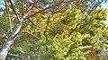 Hiking around Blaubeuren 4 (38536428710).jpg