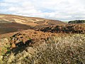 Hill fort, Friar's Nose - geograph.org.uk - 1567144.jpg