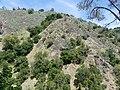 Hillside at Alum Rock Park, San Jose, California.jpg