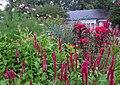 Hillwood Gardens in July (19179417824).jpg