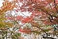 Hiroshima Fudoin Temple, Higashi Ward; November 2018 (04).jpg