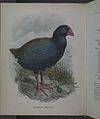 History of the birds of NZ 1st ed p188-2.jpg