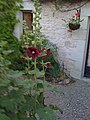 Hollyhocks in the Moat at Chateau d'Alogny - panoramio.jpg