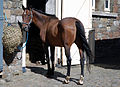 Horse (2759905603).jpg