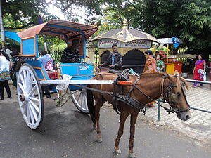 Tourist attractions in Mysore - Horse carriage in Mysore