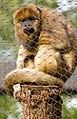 Houston Zoo 2010 -15 (5309317257).jpg