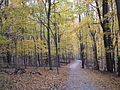 Hudson Springs Park Trail in November.JPG