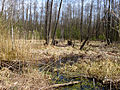 Huta-Mezhyhirska swamp.JPG