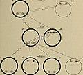Hygiene, dental and general (1920) (14594667688).jpg