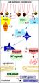 IkappaB kinase (IKK) diagram.png