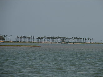 Pulicat Lake - Palm trees lining the barrier islands