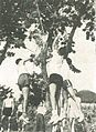 Indonesian sailors climbing tree, Jalesveva Jayamahe, p228.jpg