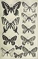 Insektenborse. (1899) (14777675475).jpg