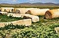 Iran - Fars - Pasargad - panoramio.jpg