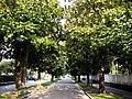 Italien Arco Magnolienallee Viale Delle Magnolie.JPG