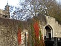 Ivy on the wall. Tower of London - panoramio.jpg