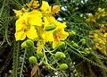 JNU Yellow Flowers Vines.jpg