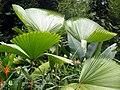 Jardim Botânico (Botanical Garden) (3455420510).jpg
