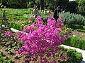 Jardin botanique Dijon 023.jpg