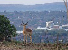 vitesse des lieux de rencontre à Pretoria