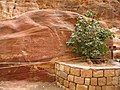 Jordan, Petra, (Red rocks with green vegetation); DSCN1034.jpg