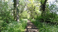 Jubilee Wood, Malden Rushett 3.JPG