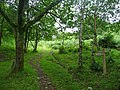 Junction of paths in Wood Combe - geograph.org.uk - 1709031.jpg