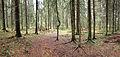 Jyväskylä - forest in Haukkamäki2.jpg