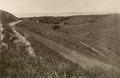 KITLV - 79906 - Kleingrothe, C.J. - Medan - Pineapple plantation in the Buona Vista Road, Singapore - circa 1910.tif