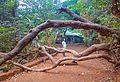 Kasturba Rd, Matheran, Maharashtra 410102, India - panoramio (14).jpg