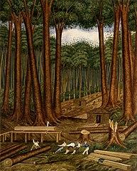 Kauri forest, Wairoa River, Kaipara. [1839]