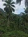 Kegalle, Sri Lanka - panoramio (3).jpg