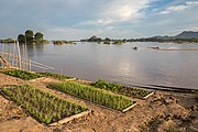 Kitchen garden on a Mekong bank.jpg