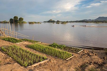 Kitchen garden on a Mekong bank