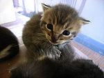 Kitten-stare.jpg