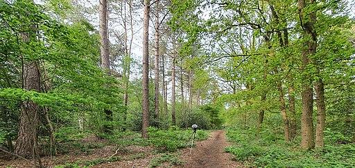 Klein bos bij Cromvoirt