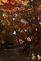 Kobe Suma Rikyu Park07n4592.jpg