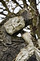 Kocsola, Nepomuki Szent János-szobor 2020 05.jpg