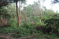 Koshi Tappu Wildlife Reserve (2).jpg