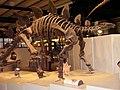 Kostra stegosaura.jpg