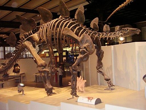 Kostra stegosaura