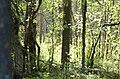 Kuusamo, Finland - panoramio (5).jpg