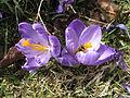 Květy 9919.jpg