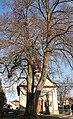 Lípa malolistá u kaple v Kameničné.jpg