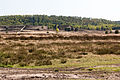 Lüdinghausen, Naturschutzgebiet Borkenberge -- 2016 -- 2279.jpg