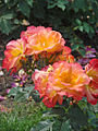 """La rose """"Bernadette Chirac"""" dans le parc du palais de Rundale (7656220876).jpg"""