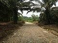 Lae Oram, Simpang Kiri, Subulussalam City, Aceh, Indonesia - panoramio (8).jpg