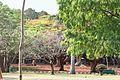 Lalbagh garden in banglore reddish scene.jpg