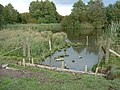 Lambley Reed Pond - geograph.org.uk - 1013704.jpg