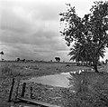 Landschap in Nickerie, Bestanddeelnr 252-5513.jpg